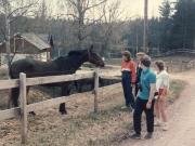Scan12264 EN SVENSK HEST 10-05-1986