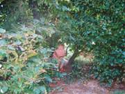 scan16130_0096 KAROLINE PÅ LEGEPLADSEN 2004