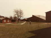 Scan11606 FUGLSØ 28-04-1984